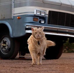 cool Cat walking in front of RV